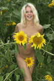Valia - Summer Flowersc0chc56qgo.jpg
